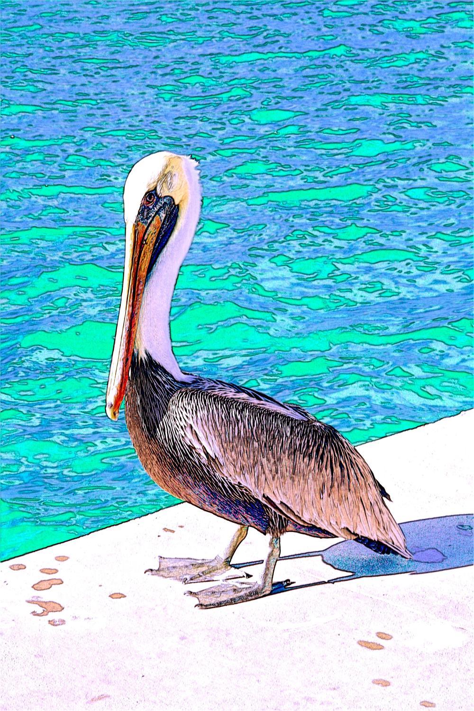 A Pelican Pose  W107