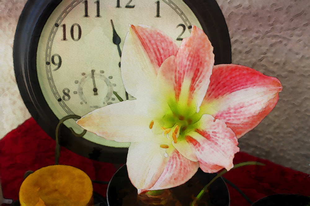 Time for Flowers  W113