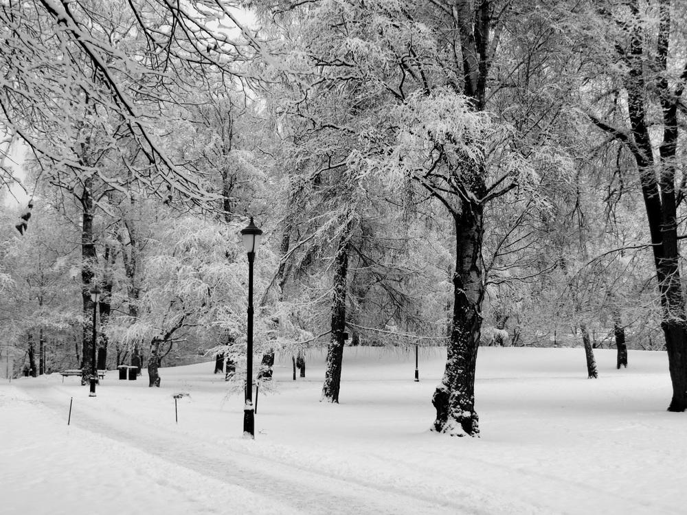 February in Oslo  B104