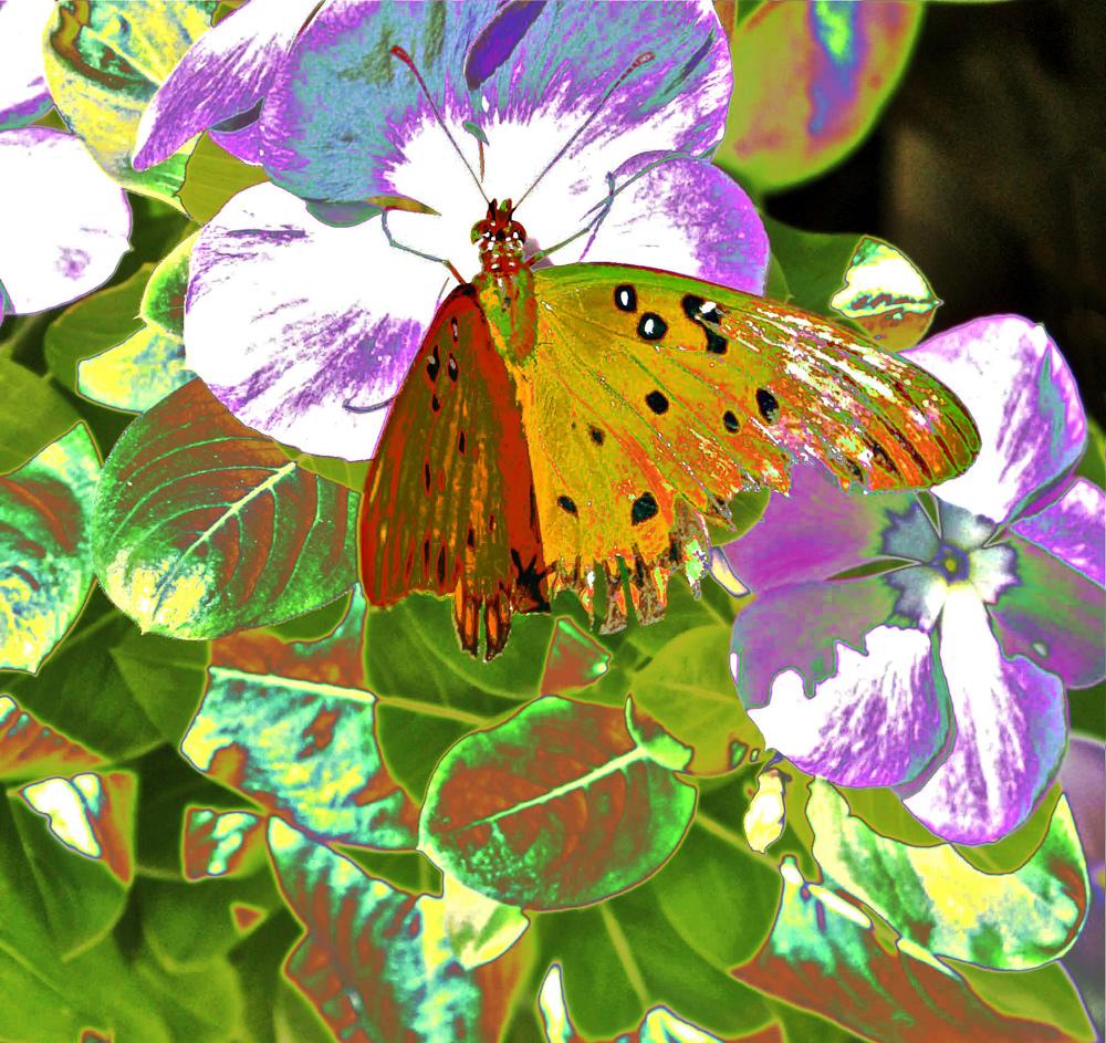 Lovely Butterfly  W117