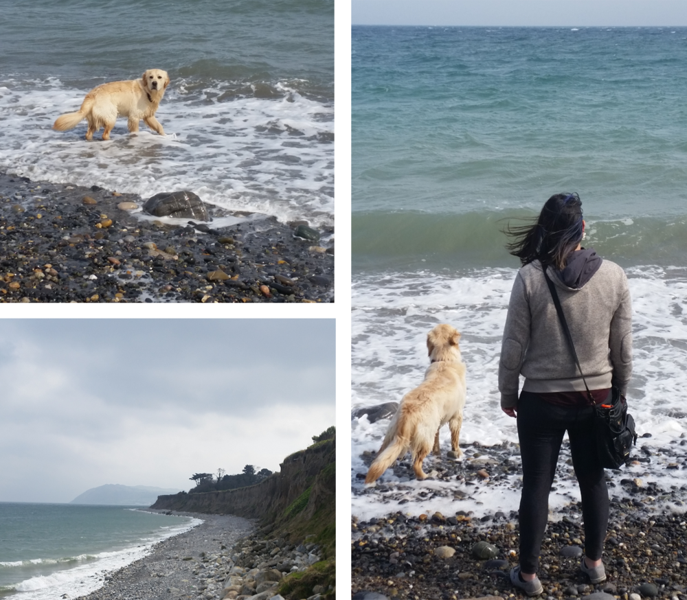 Killiney. Benji. Beaches.