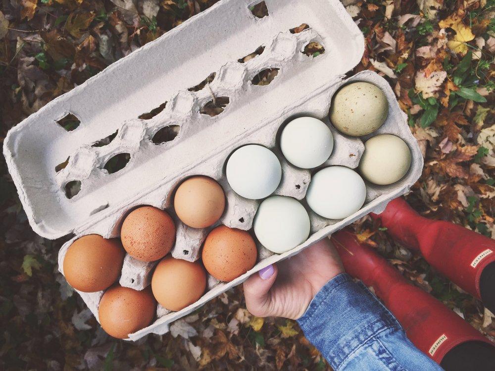 CSA eggs.JPG