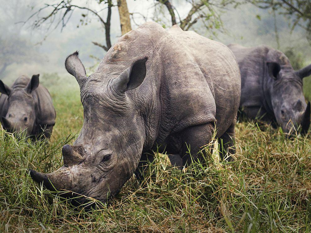 Photo credit: Stefane Berube via National Geographic