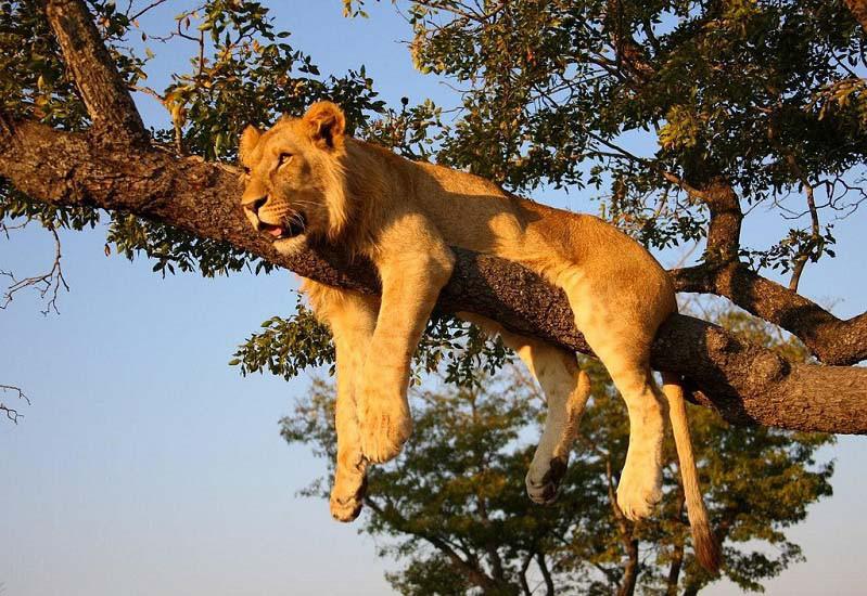 Photo credit: Safari Partners via flickr