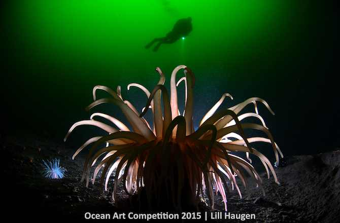 "1st Place, Cold Water Category, ""Anemone Light"""