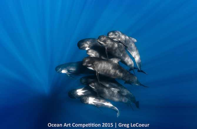 "1st Place, Portrait Category, ""Pilot Whales"""