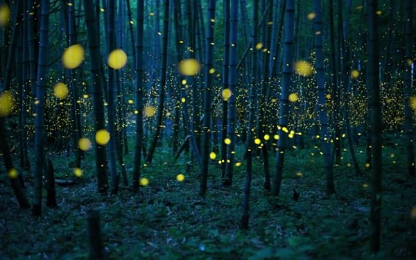 Enchanted Bamboo Forest - Kei Nomiyama, Japan, Winner, Open, Low Light, 2016