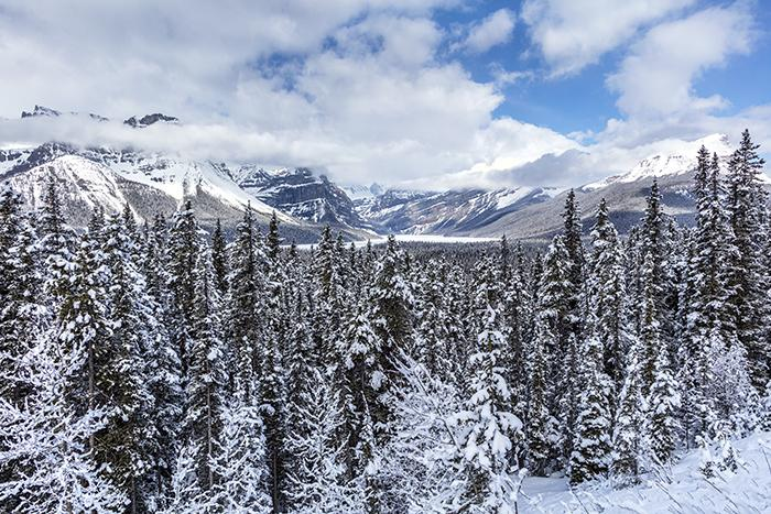 Spring vista along the Icefield Parkway, Banff National Park