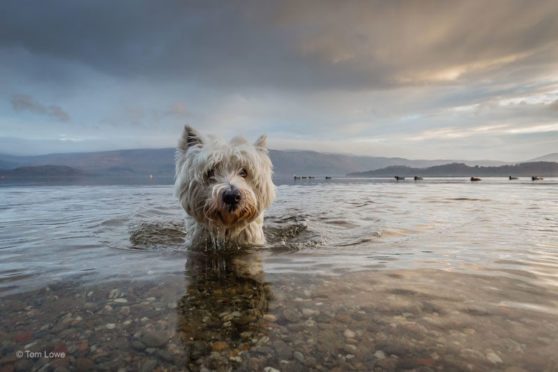 "1st Place Winner, Tom Lowe, UK. ""Baxter's Highland Adventure"""