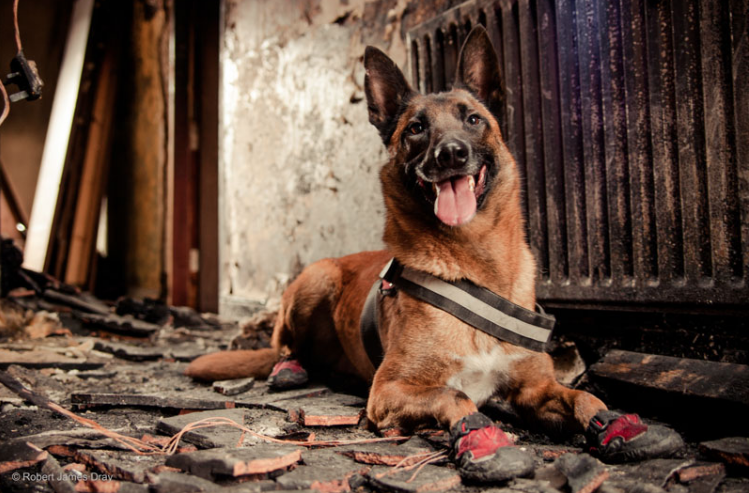 "2nd Place Winner, Robert James Dray, UK. ""Kai / Fire Investigation Dog"""