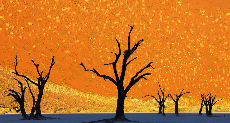 Dead trees park, Namibia. Photo by: Frank Krahmer