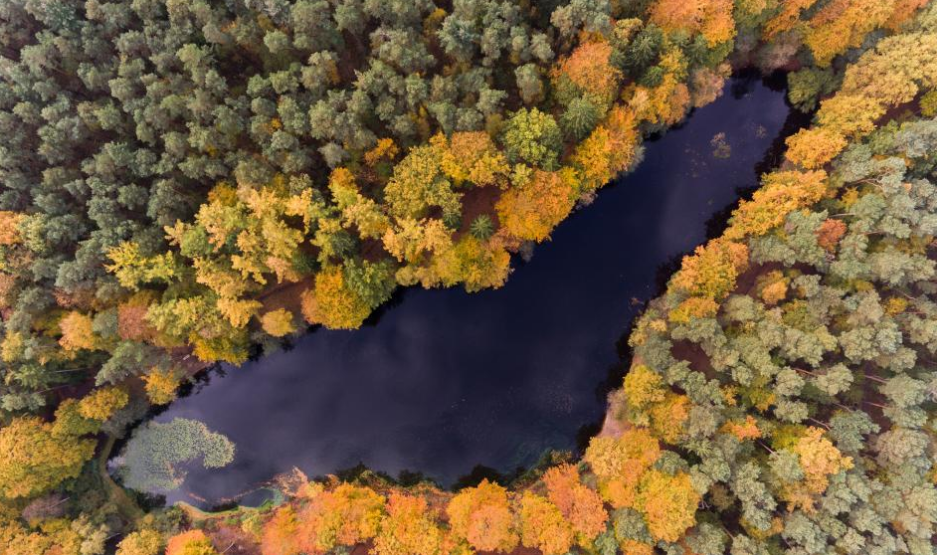Colorful trees surround a body of water in Kloevensteen Forest, Hamburg-Rissen, Germany. Photo credit: Rainer