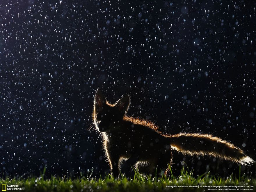 """Dancing In The Rain."" Photo credit: Vladislav Kamenski"