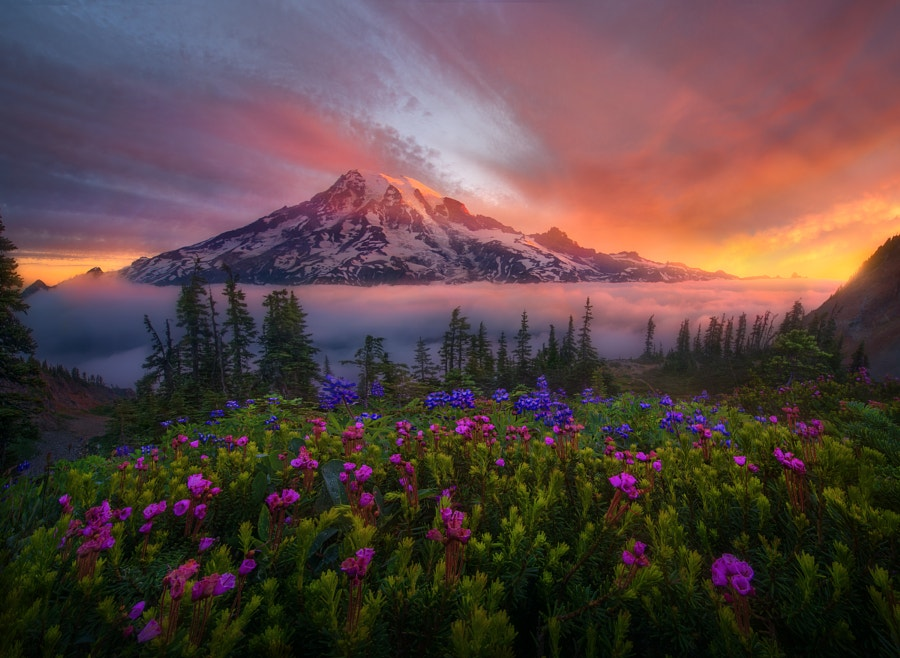 Photo credit: Tahoma the Great by Marc Adamus