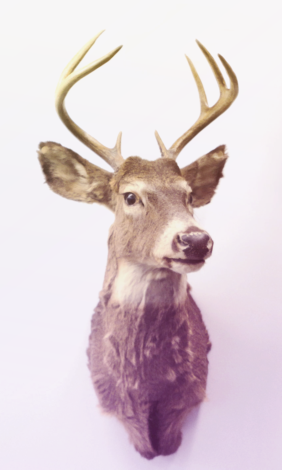 taxidermy4.png