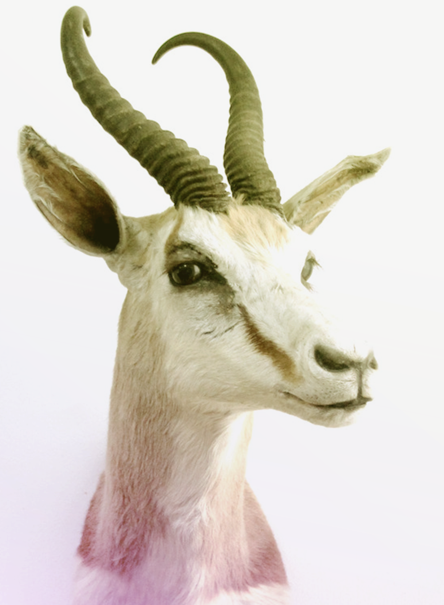 new taxidermy1 copy.png