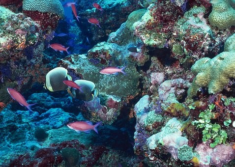 Healthy coral reefs are bright and colorful and are home to a multitude of organisms.