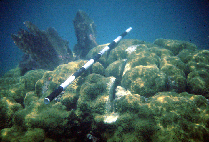 Coral reef damage due to grounding of a small vessel