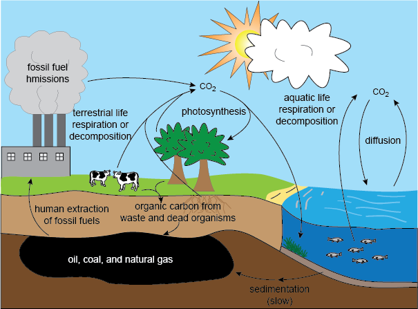 The Carbon Cycle (Shmoop)