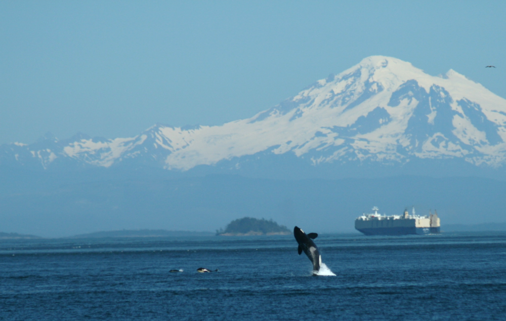 Vancouver Fraser Port Authority's Enhancing Cetacean Habitat and Observation (ECHO) Program is aimed at better understanding and managing the impact of shipping activities on at-risk whales throughout the southern coast of British Columbia (photo by Joan Lopez).