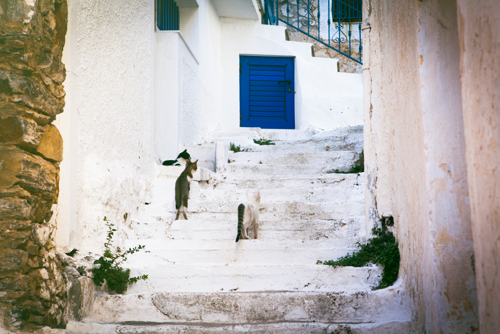 Quintessential Greek Island, white walls, blue doors, stairs, and . . . cats!