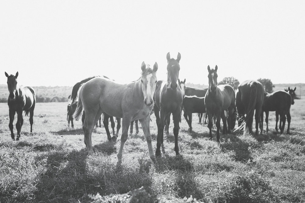 Image Title: Fisher Ranch Foals