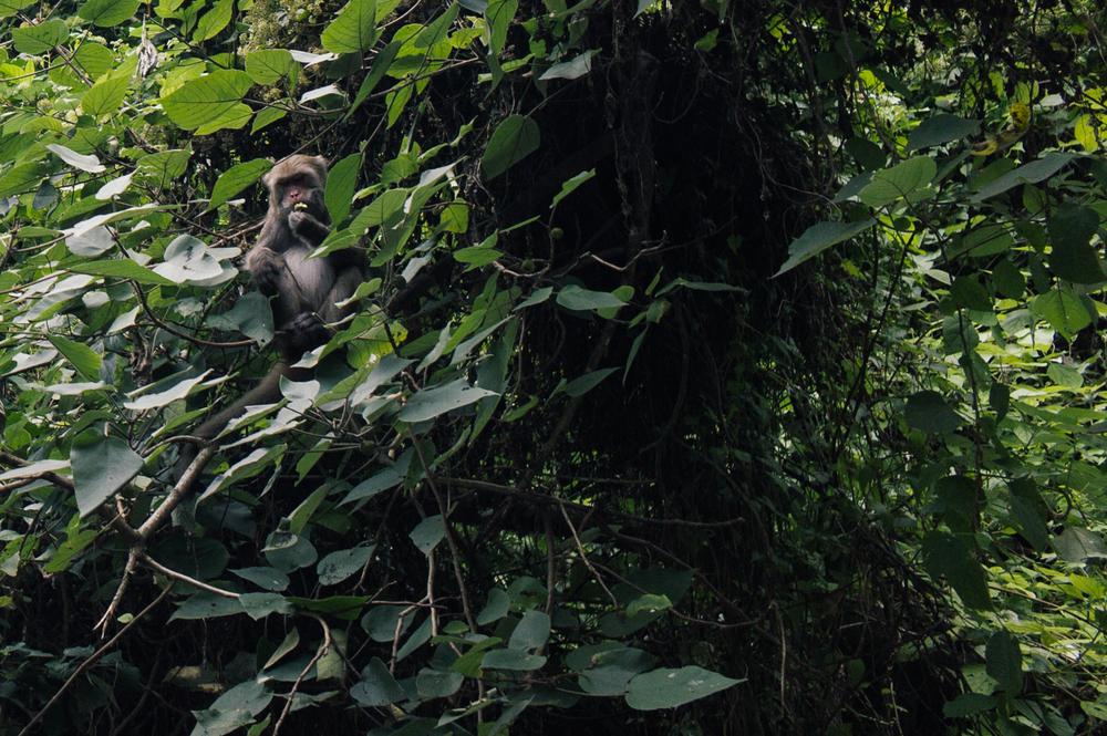 Spotted: monkey enjoying his breakfast!