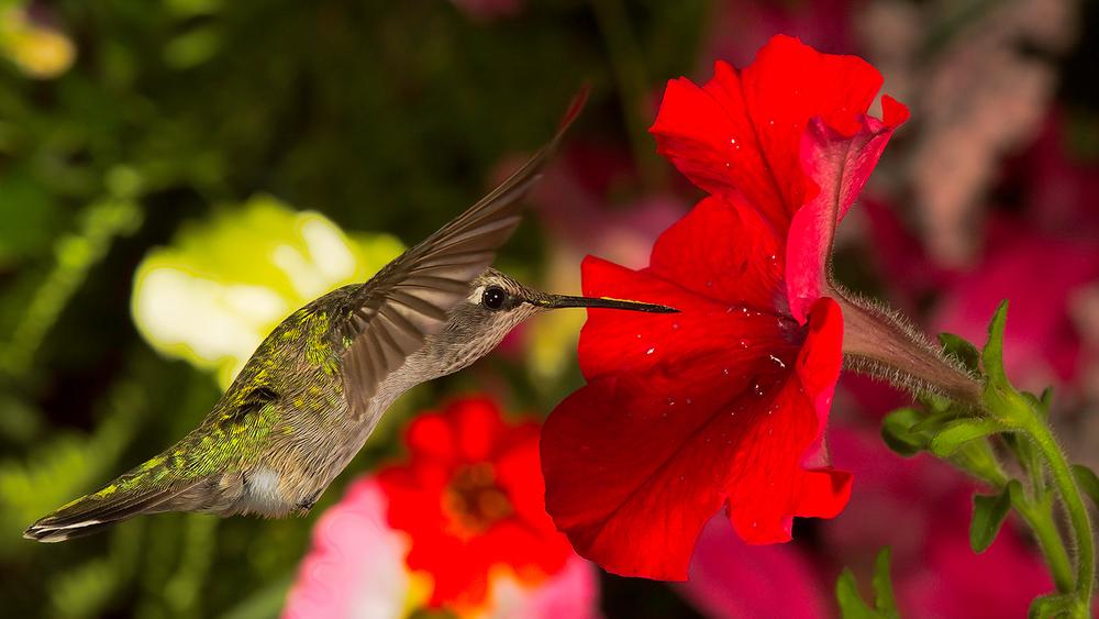 Yummy Nectar