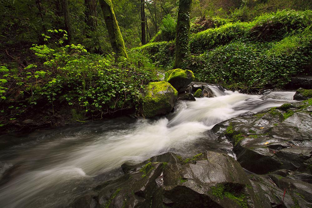 Anselmo Creek