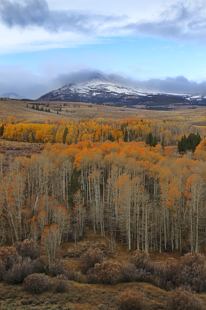 Colors Of Aspen