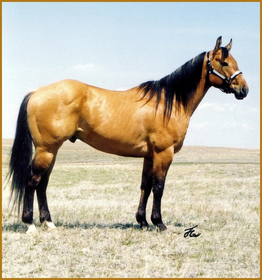 """Dun Drift """"Ike""""   2000 Dun Stallion,Grandson of Sun Frost    Nominated to :Barrel Breeders Incentive,Who's Your Daddy,Ranching Heritage Breeders"""