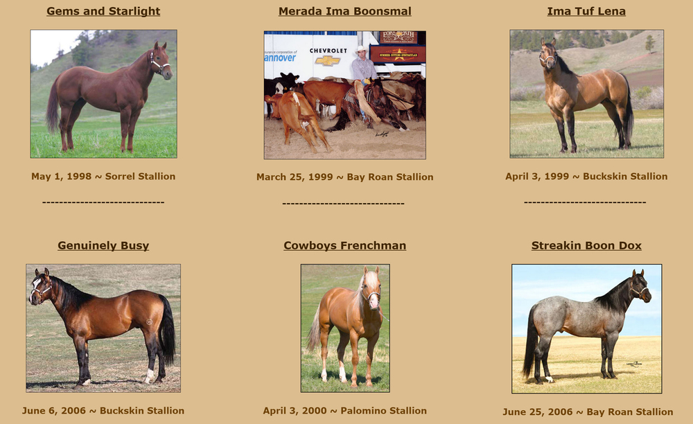 Some of the Weaver Ranch Stallions