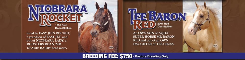 Weber Quarter Horses Stallions