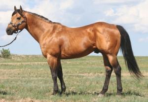 CM Dynamites Frost- image courtesy Crago Quarter Horses