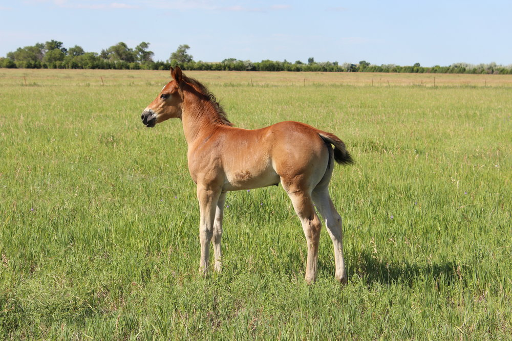 2016 woring horse.JPG