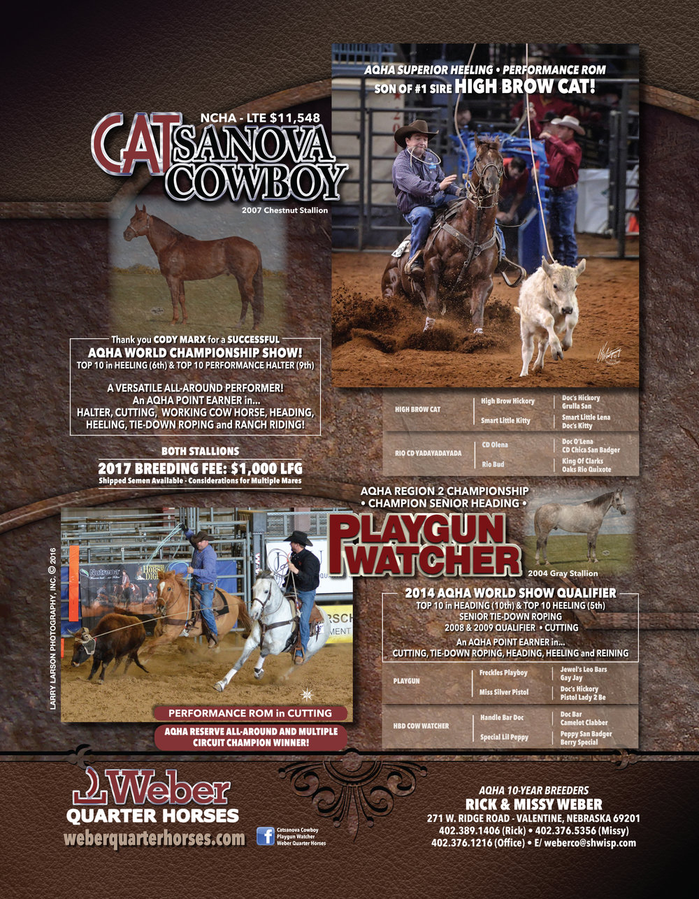 Weber Quarter Horses is proud to stand Playgun Watcher and Catsanova Cowboy