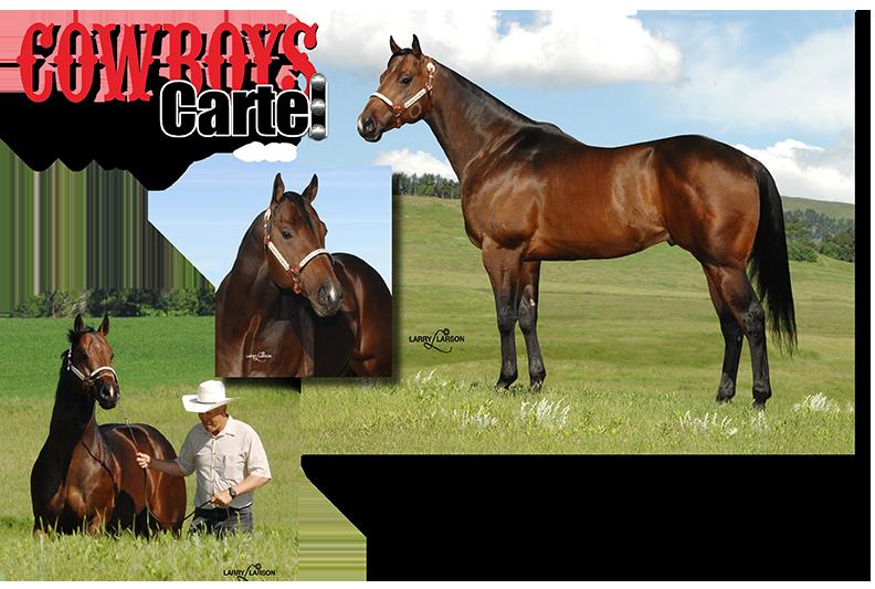 Cowboys Cartel