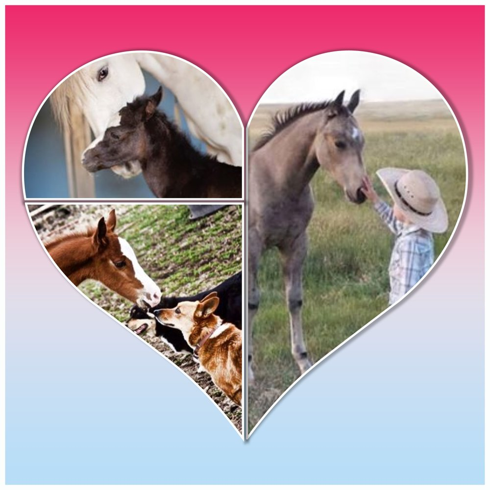 Valentine's Day 2017 Contest sponsored by Working Horse Magazine and Desire 2 B