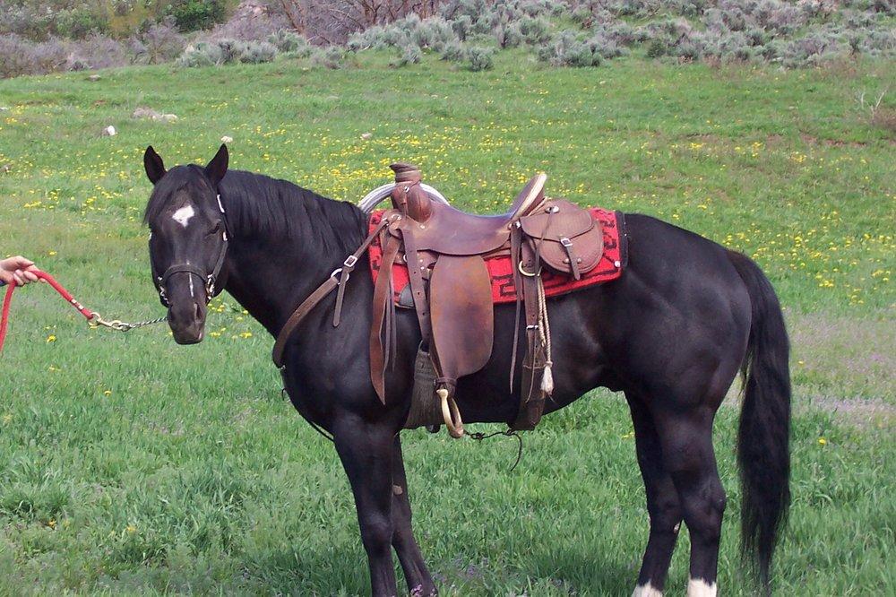 SS Skippa Cord is a 1999 black stallion
