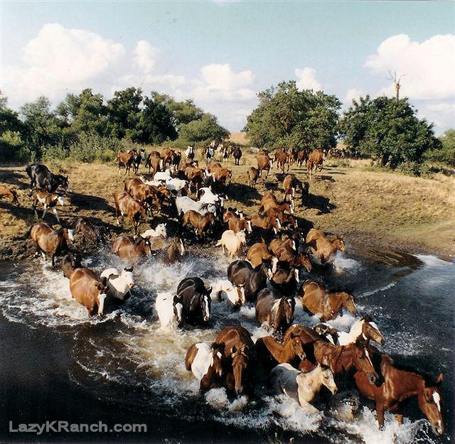 CA Horse Production Sale