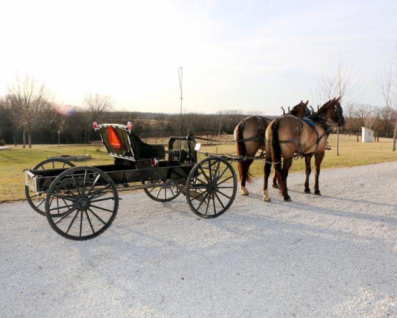 Colorado Horse, Mule & Carriage Auction Friday & Saturday, July 14 & 15, 2017 9:00 a.m. both days Location :Adams County farigrounds, Brighton, Colorado