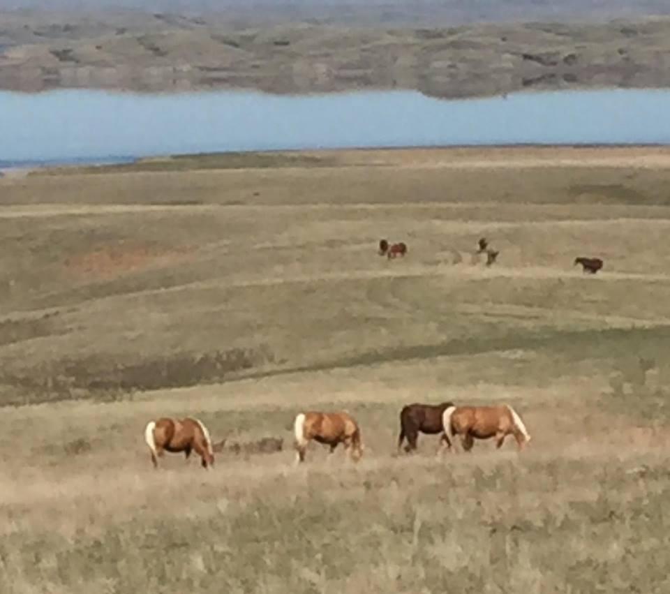 The Raymond Sutton Ranch.jpg