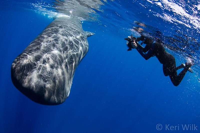 whale poop — Keri Wilk