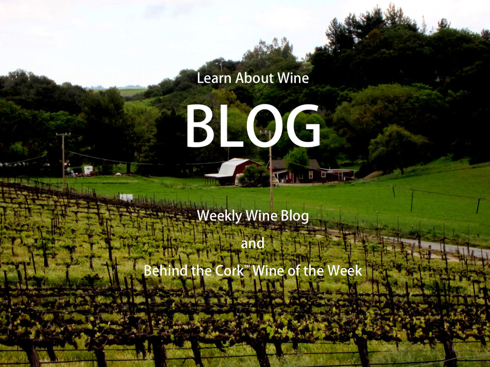 Blog on Vineyard Photo.jpg