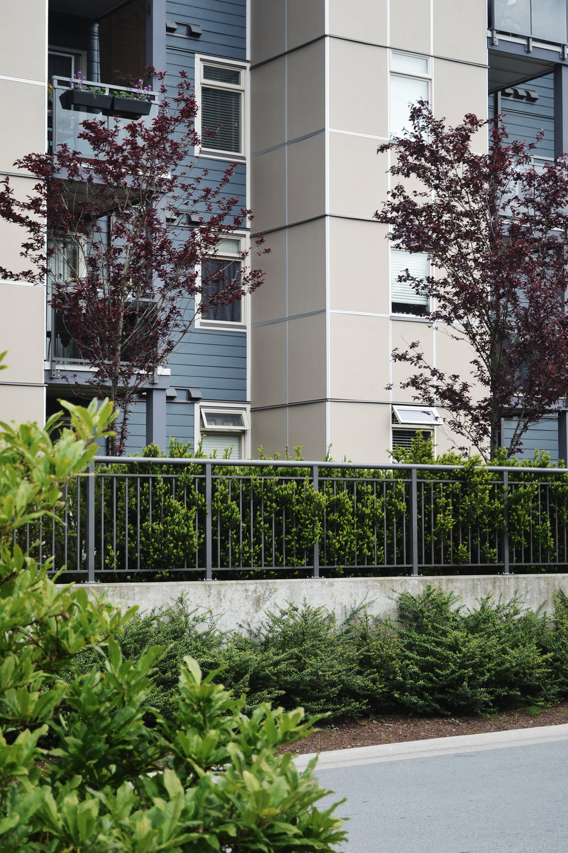 Solei Terrace_Tsawwassen_gardens.JPG