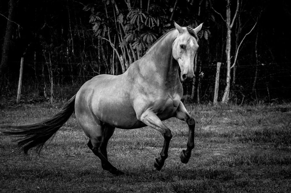 18_14_56_DSC5598-A Horse-4.jpg