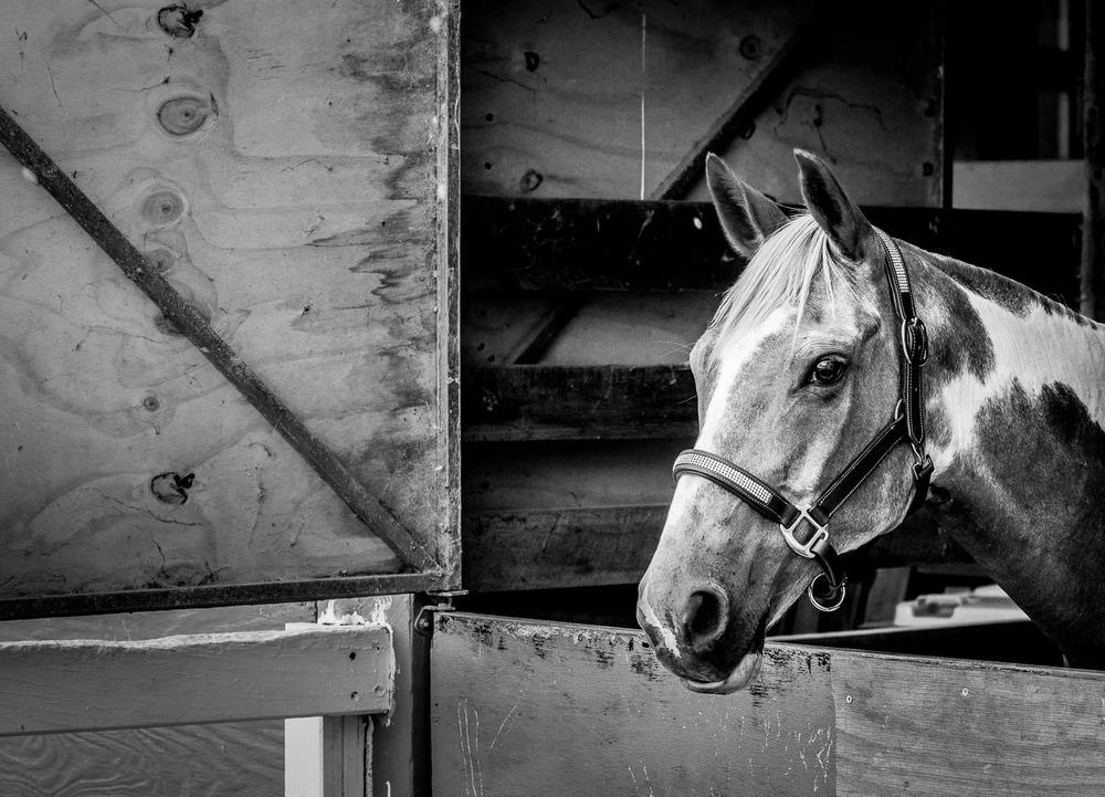 17_54_56_DSC5513-A Horse-4.jpg