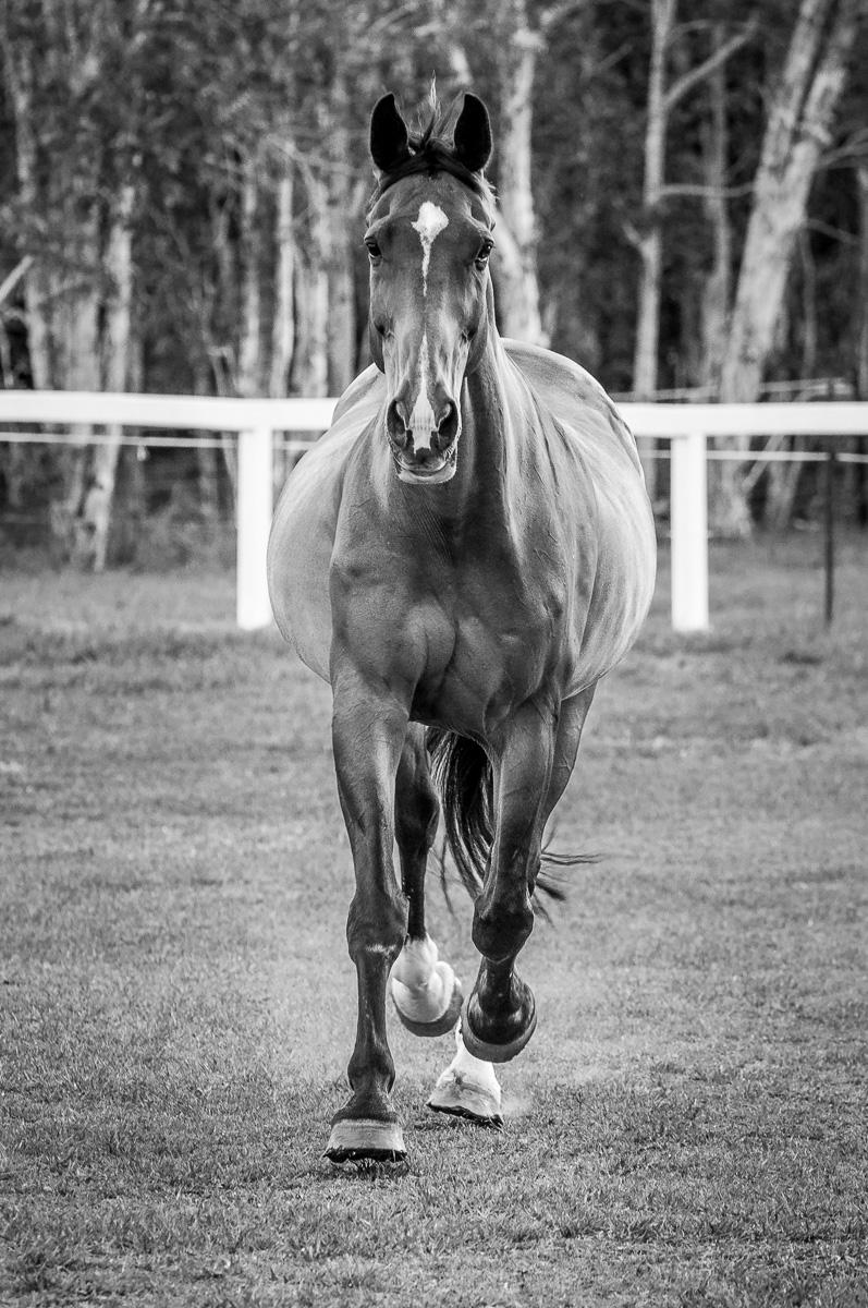 18_08_10_DSC5525-A Horse-4.jpg
