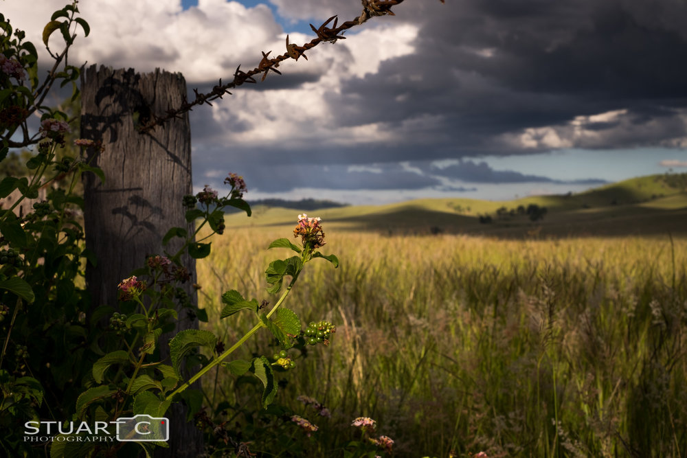 Fence post and weeds with rolling hills background