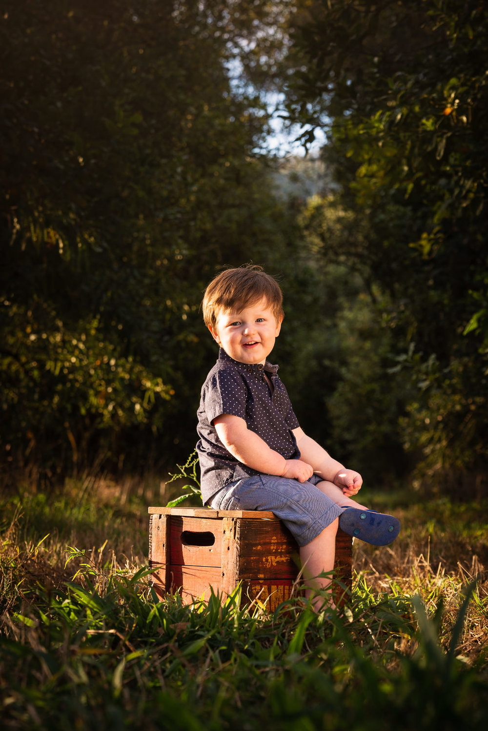 Boy sitting on vintage timber crate in middle of a macadamia grove at Beerwah
